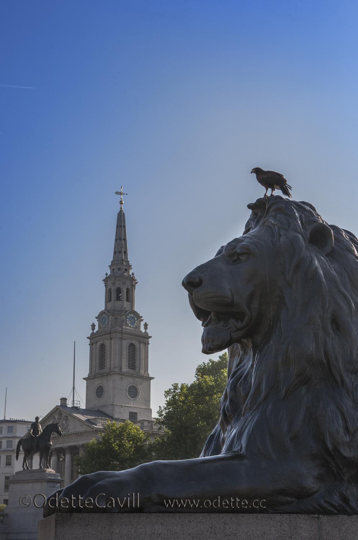 Raven on Lion.jpg