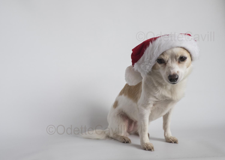 Santa Hazel