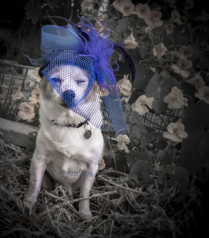 Hazel with Blue Hat winking.jpg