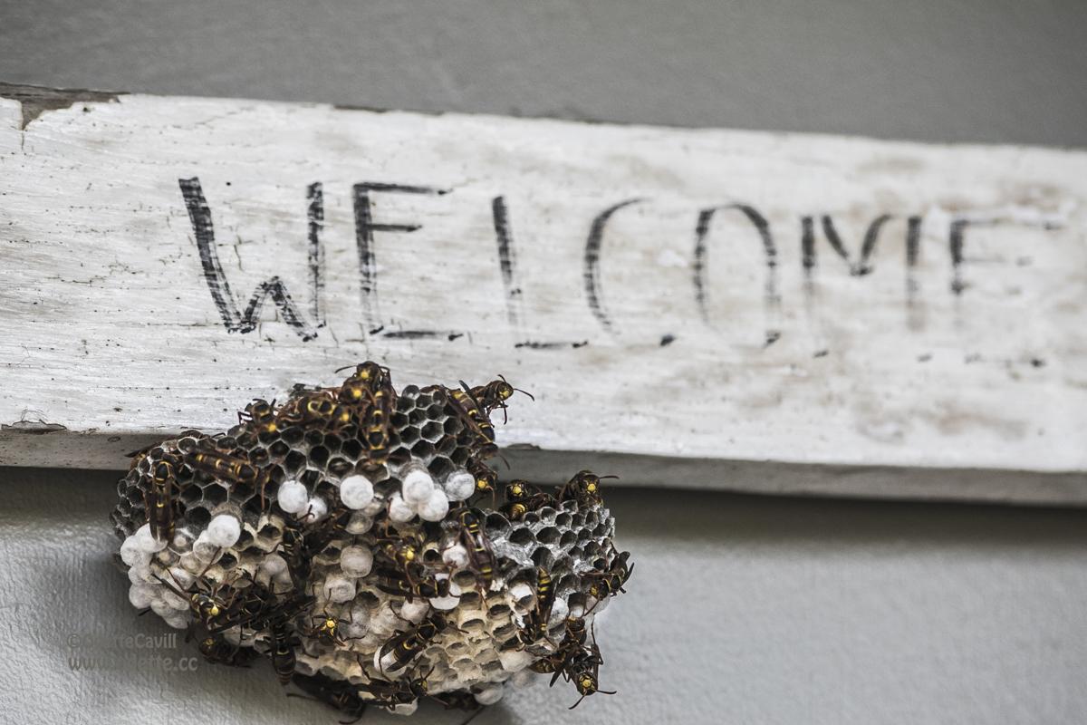 Wasp Welcome WM.jpg