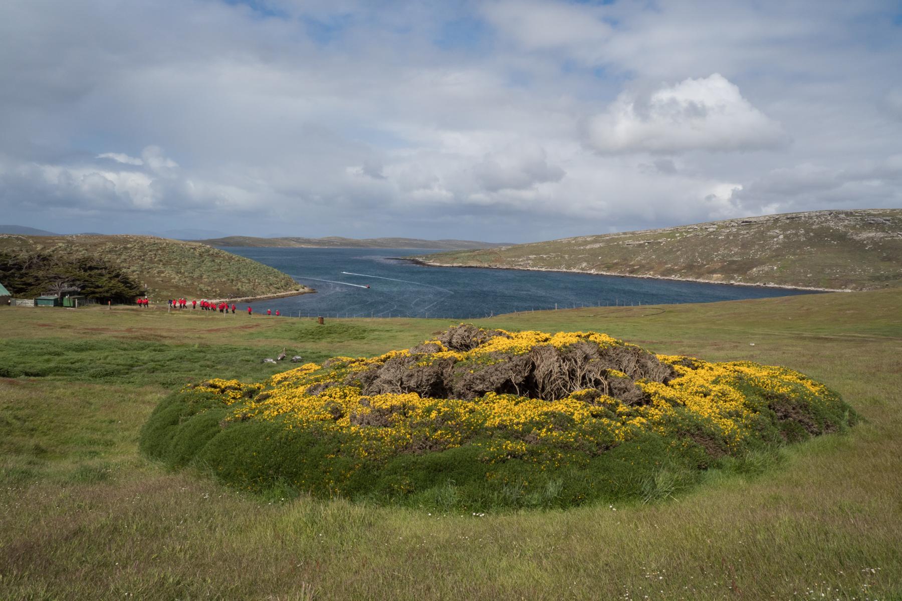 West Point Island, Falklands