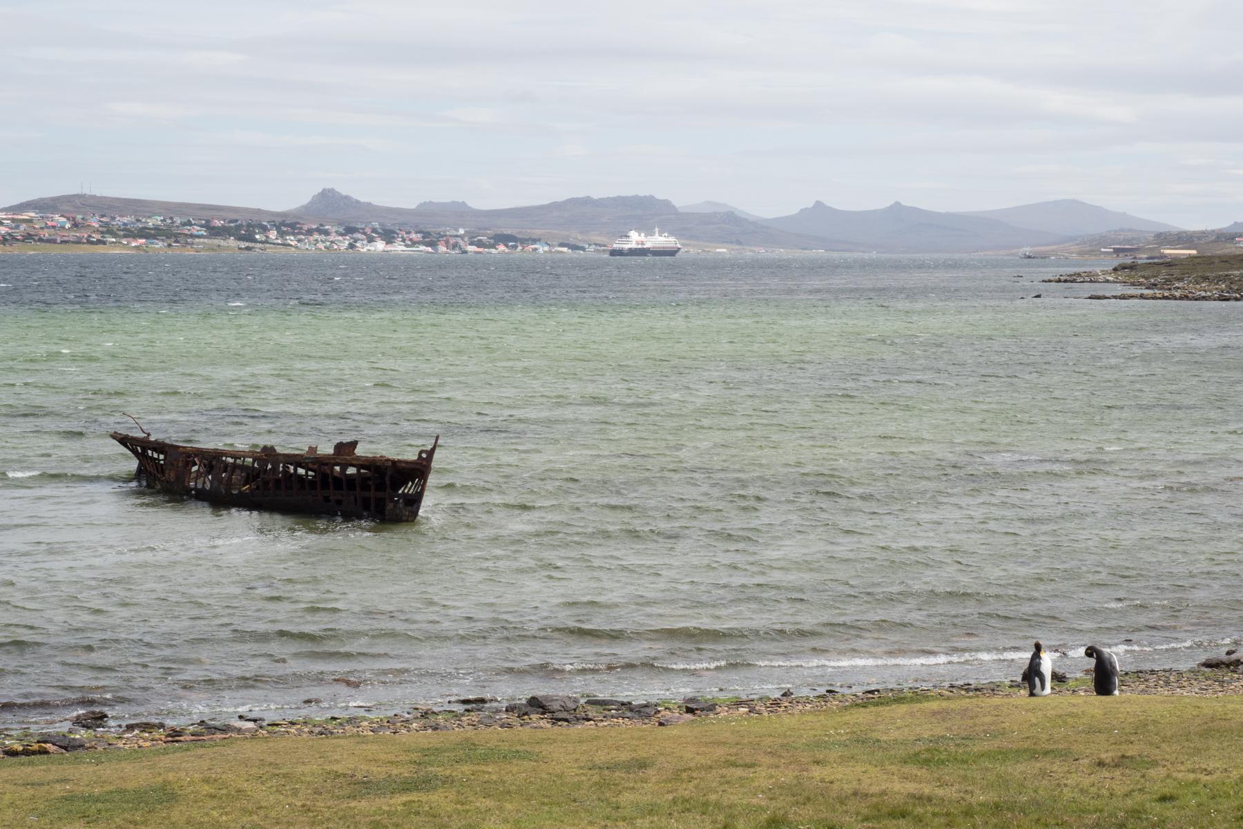 Lost King Penguins, Stanley, Falklands