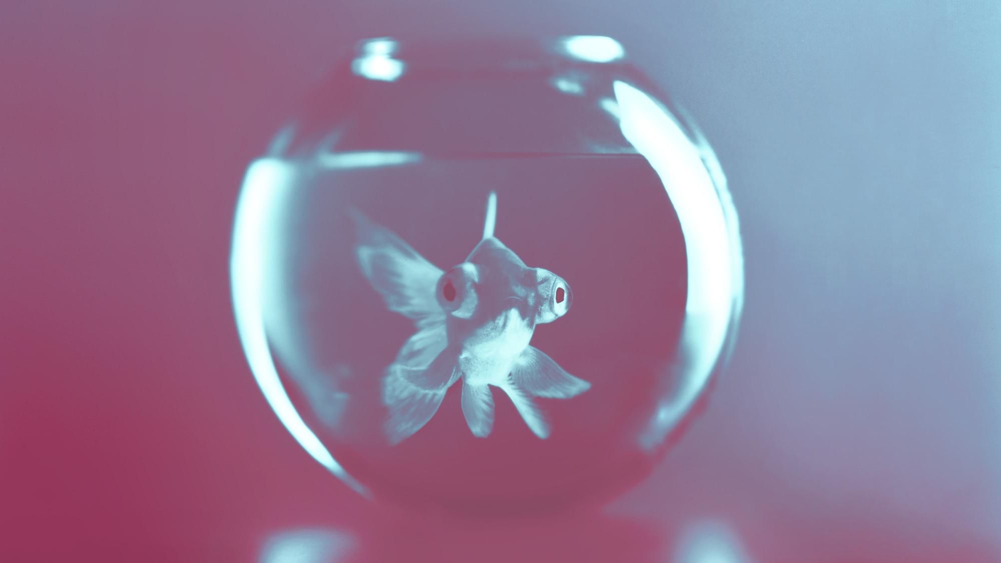 BIG-FISH-LITTLE-BOWL-STEPHEN-STEWART.jpg