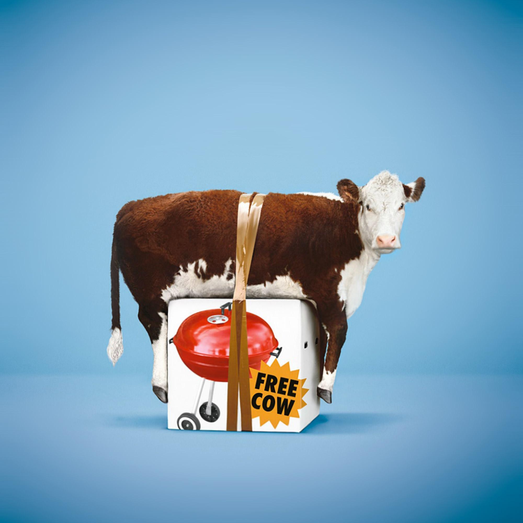 FREE-COW-STEPHEN-STEWART.jpg