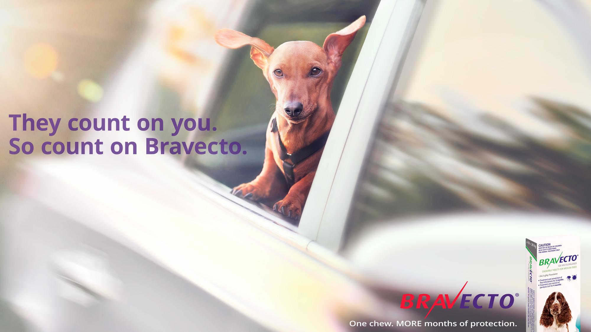 BRAVECTO-BRAND-CAMPAIGN-01-STEPHEN-STEWART.jpg