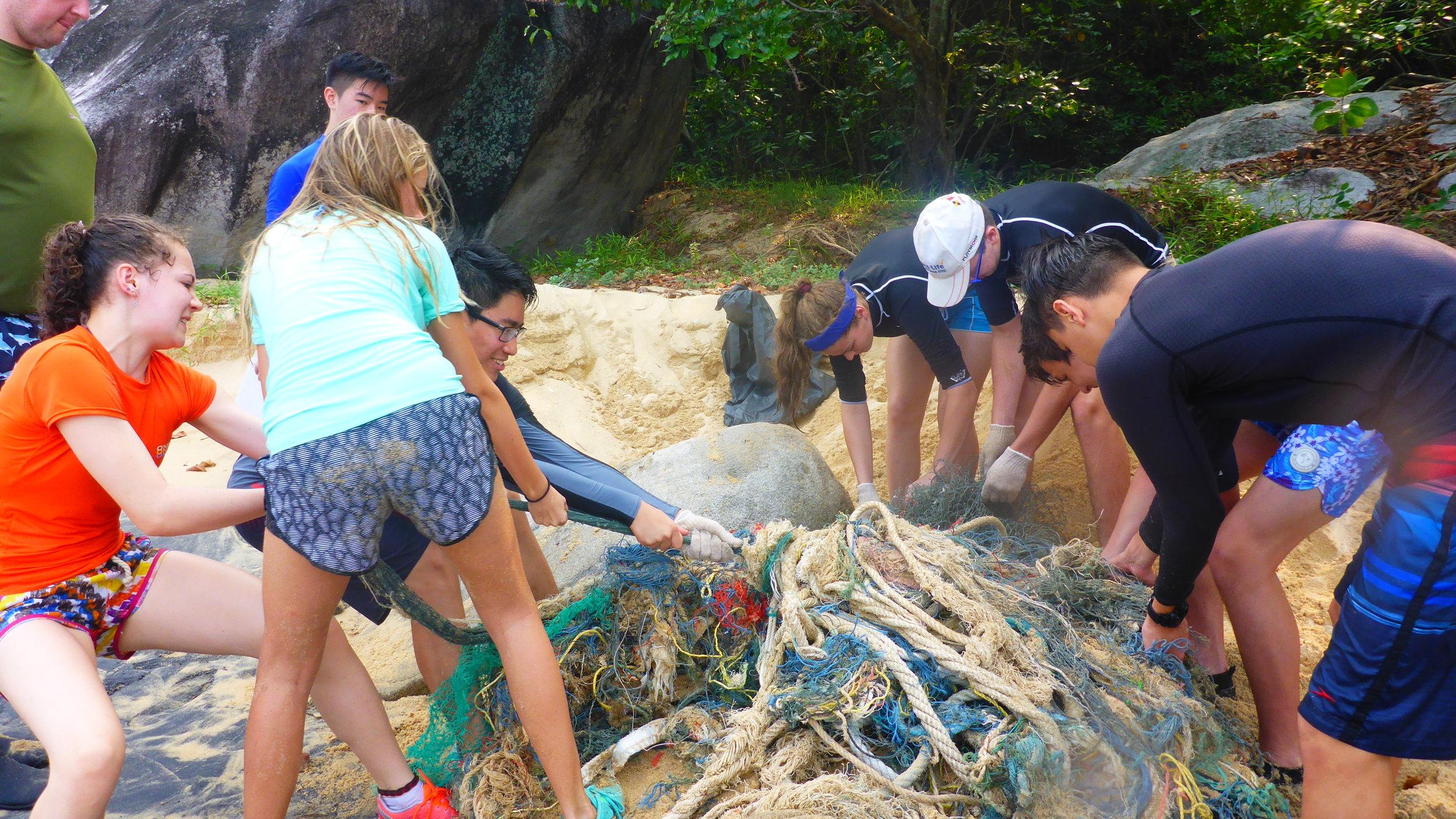 mangrove clean up