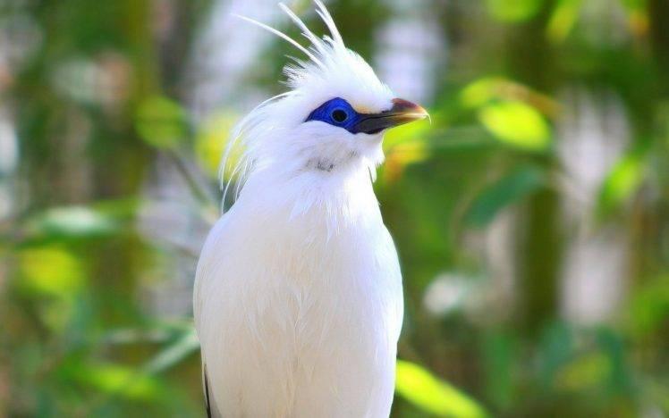 190237-birds-Bali-starling-748x468.jpg