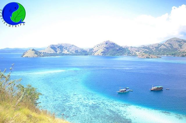 An island known for generations to harbor some of the world's most biodiverse ecosystems, Komodo has seen conservation measures enacted to protect its' unique fauna and flora since 1915.  Now a UNESCO World Heritage Site boasting the legendary Komodo dragon and some of the best dive locations in the world, its pristine waters and national park are in a class of their own.  To see a full list of our locations please go to our website at www.ecofieldtrips.com 🌎🌍🌍 #green #ecomonday #environment #ecofriendly #wildlife #plastic #pollution #protecttheearth #reducereuserecycle #ecobrick #conservation #upcycling #fieldtrip #cas #service #education #teachersofinstagram #edu #teacherlife #getoutside #internationalschool #edchat #classroom #teaching #playoutside #globaled #teachersfollowteachers #teacherswhotravel