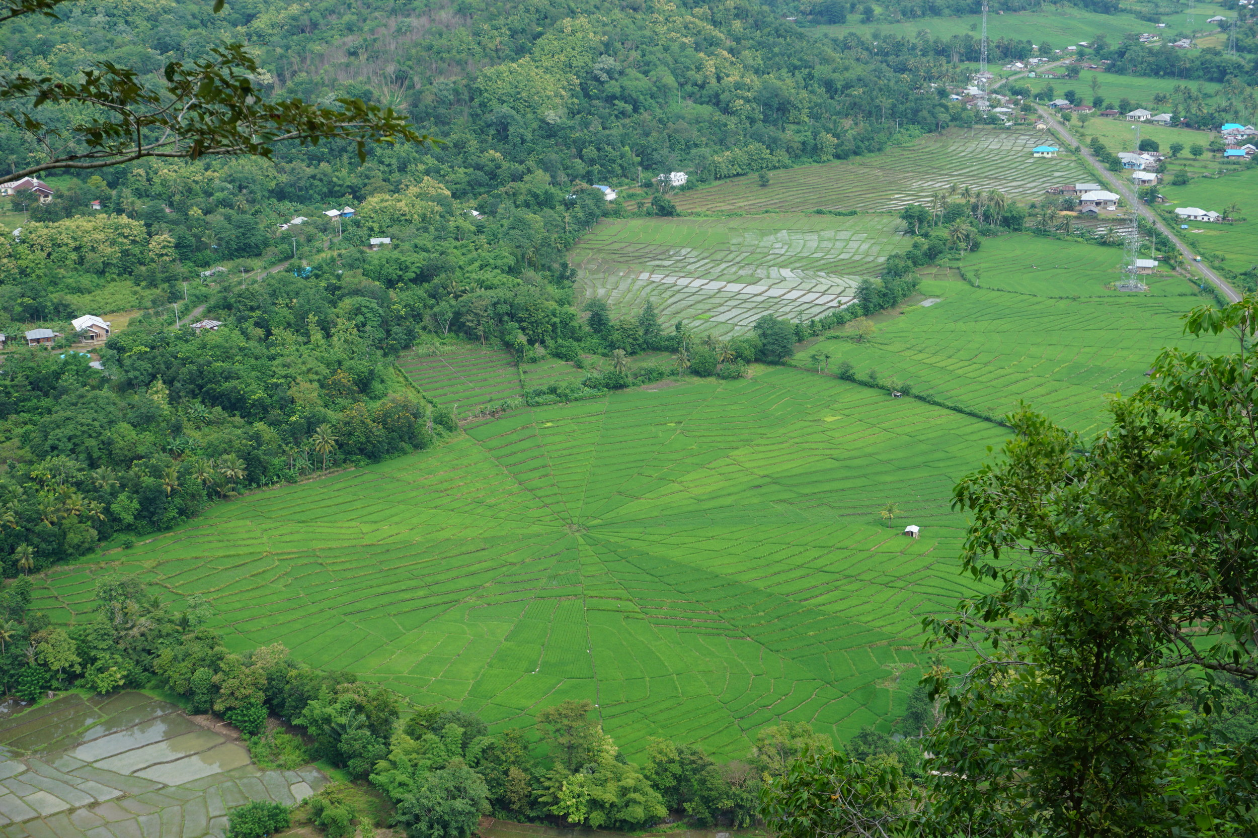 Sipderweb paddy field