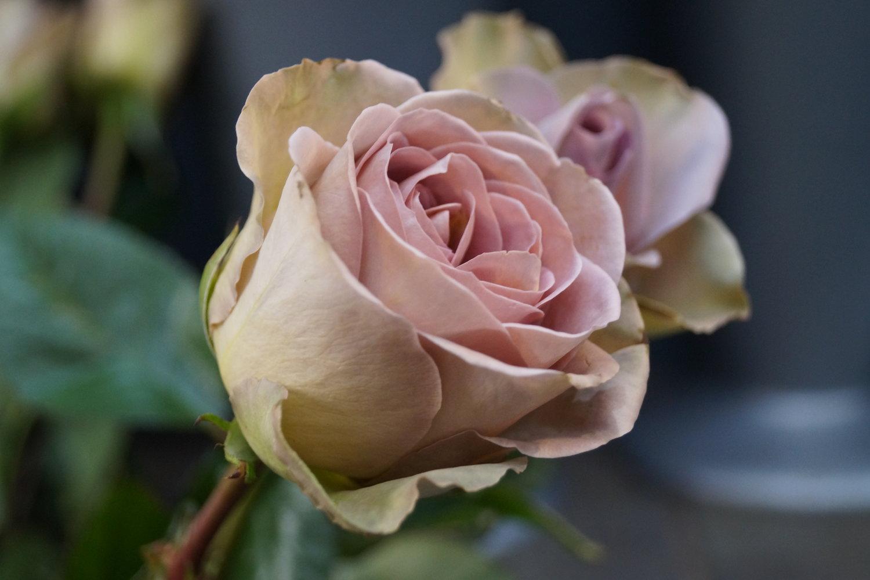 Appleblossoms - Florist110-113 Central Market, Beresford Street, St.Helier, JE2 4WLTel:+44 1534 737379Email:dianne@apple-blossoms.co.ukWebsite