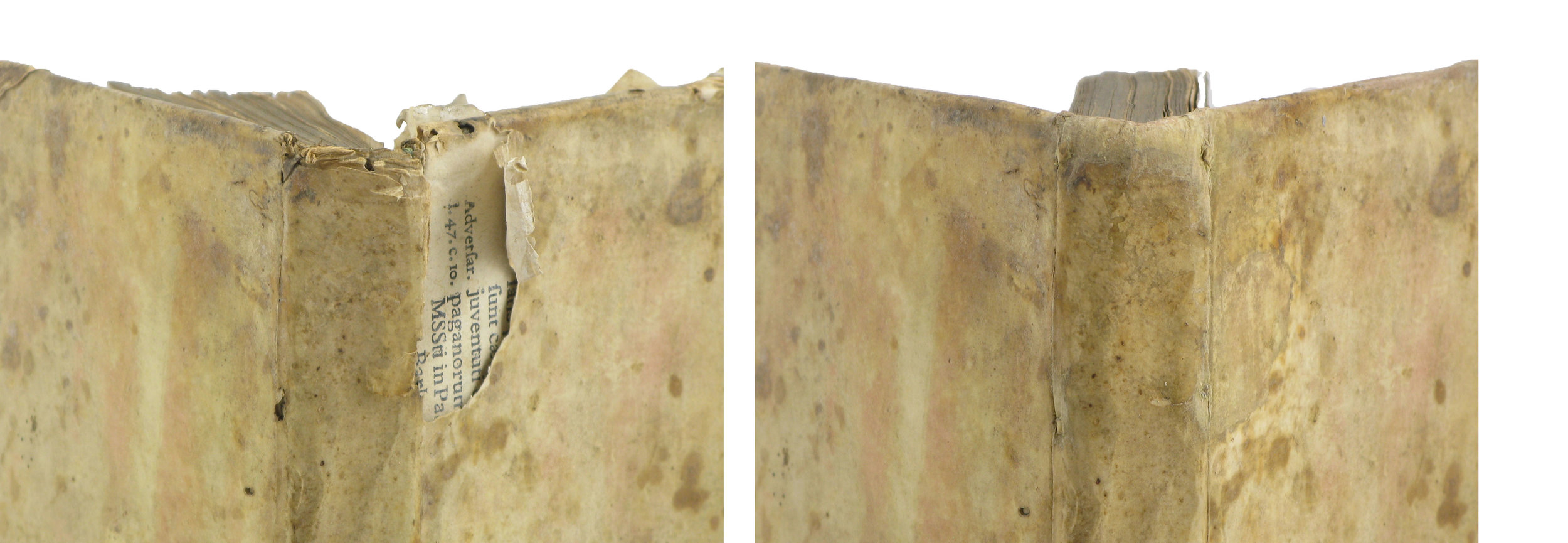 parchment before and after.jpg