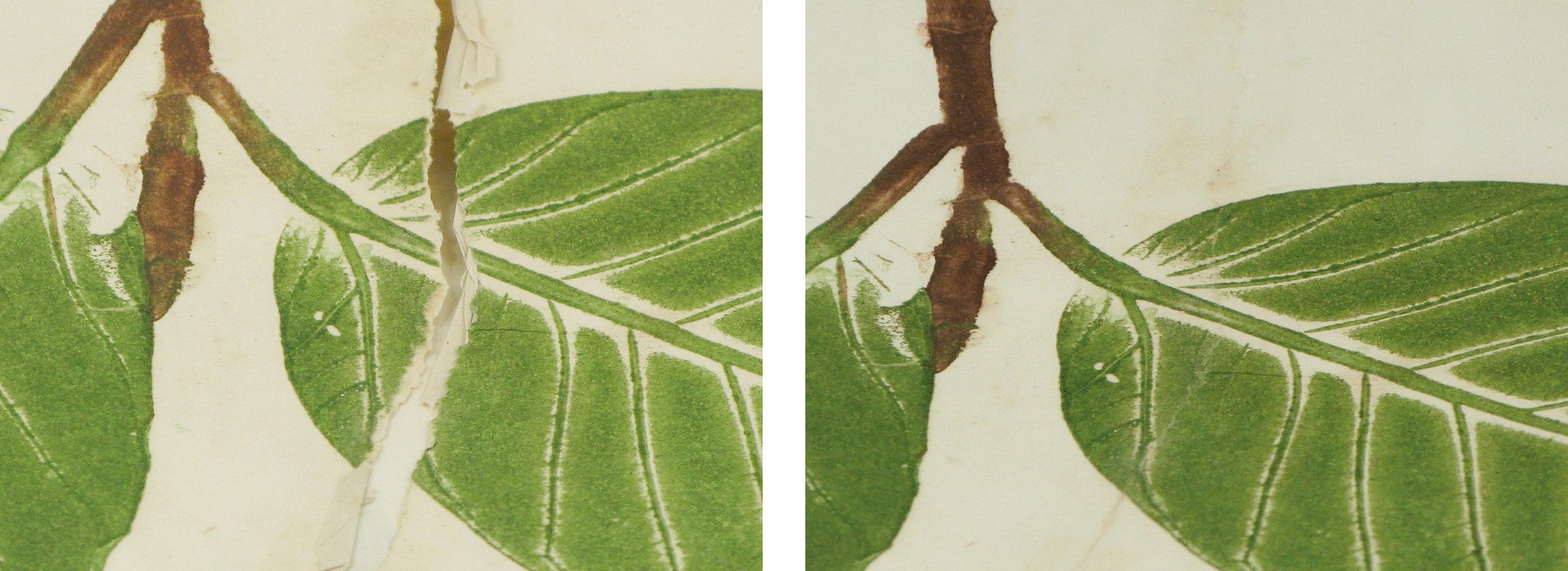 leaf paper repair.11mb.jpg