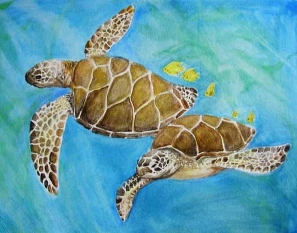 turtles-web.jpg