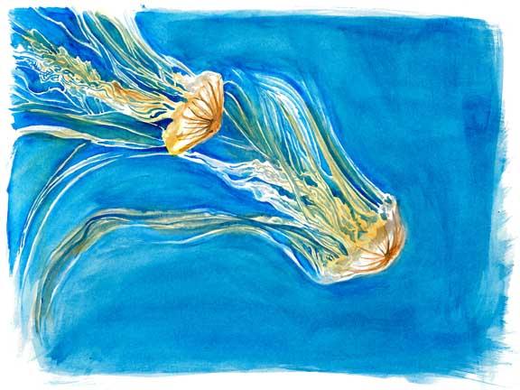 web-Jellyfish.jpg