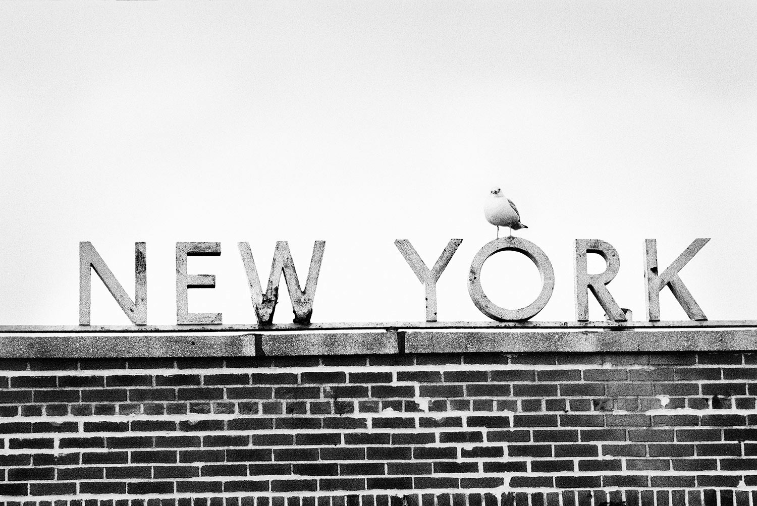 Manuel Armenis · New York