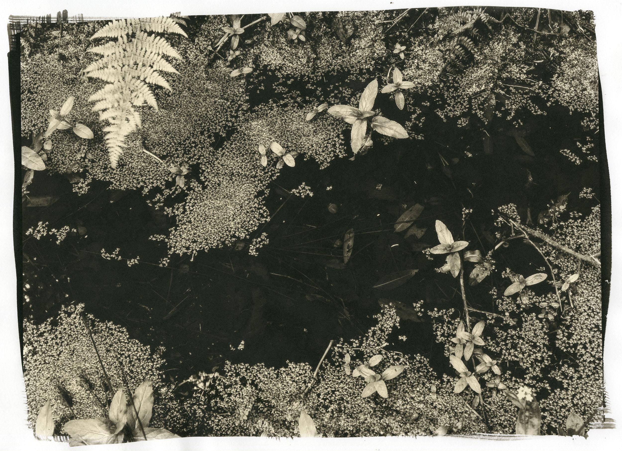 """Milky Way  (Platinum/Palladium Print, 11 x 14"""")"""