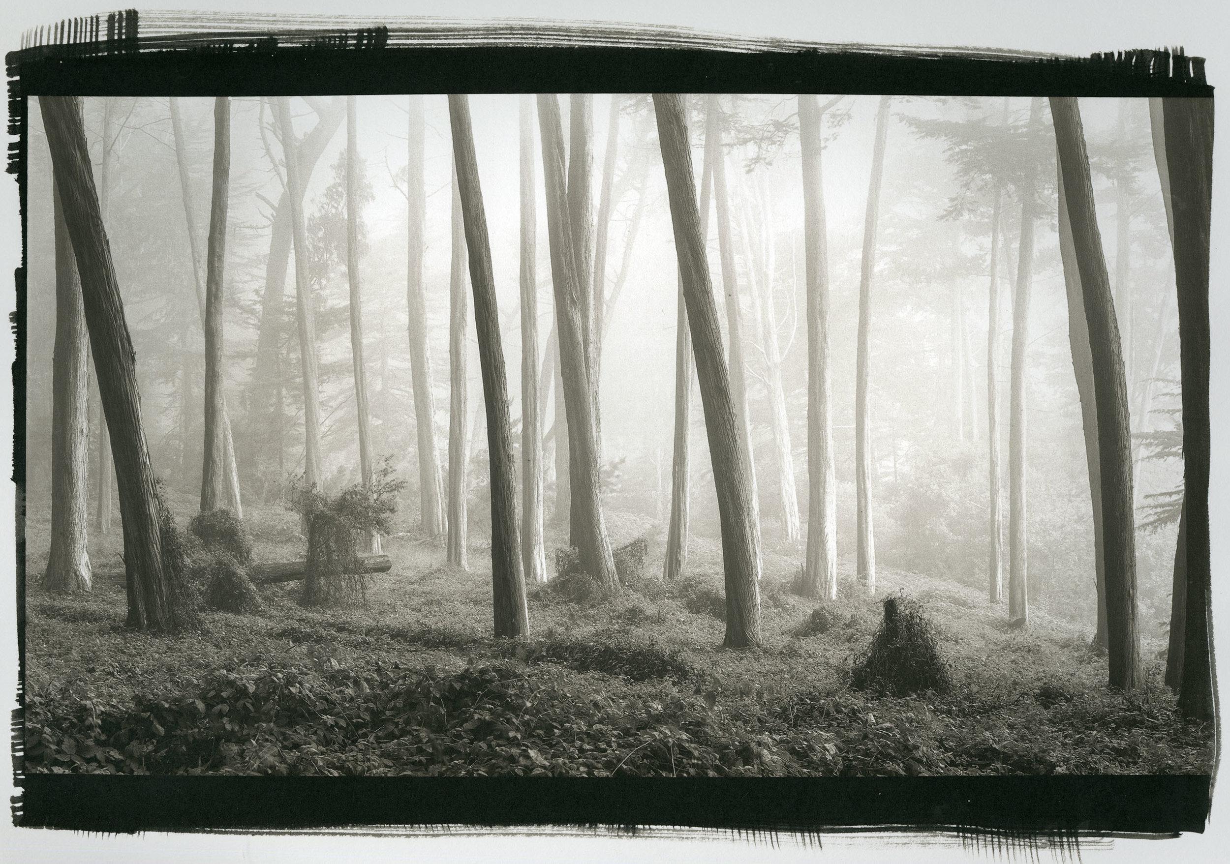 "Trees and Ivy No.1 (Platinum/Palladium Print, 8"" x 14"")"
