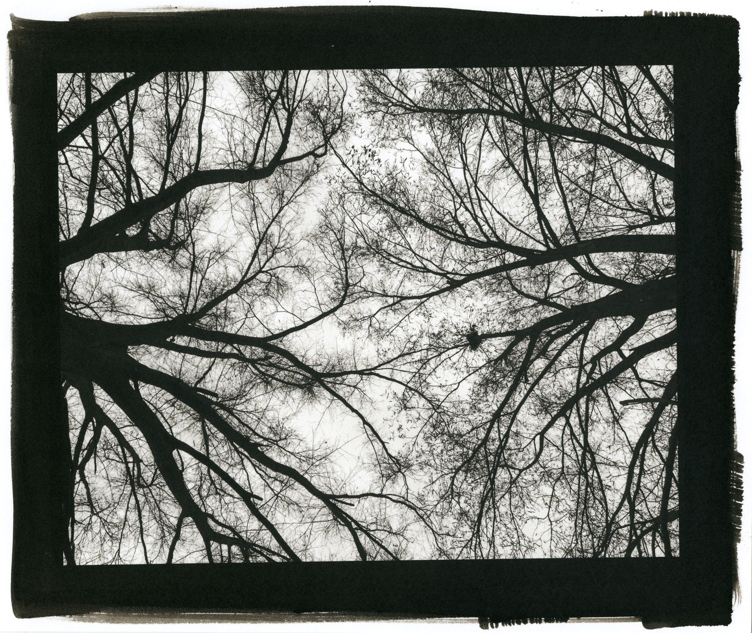 """Squirrel's Nest (Platinum/Palladium Print, 8 x 10"""")"""