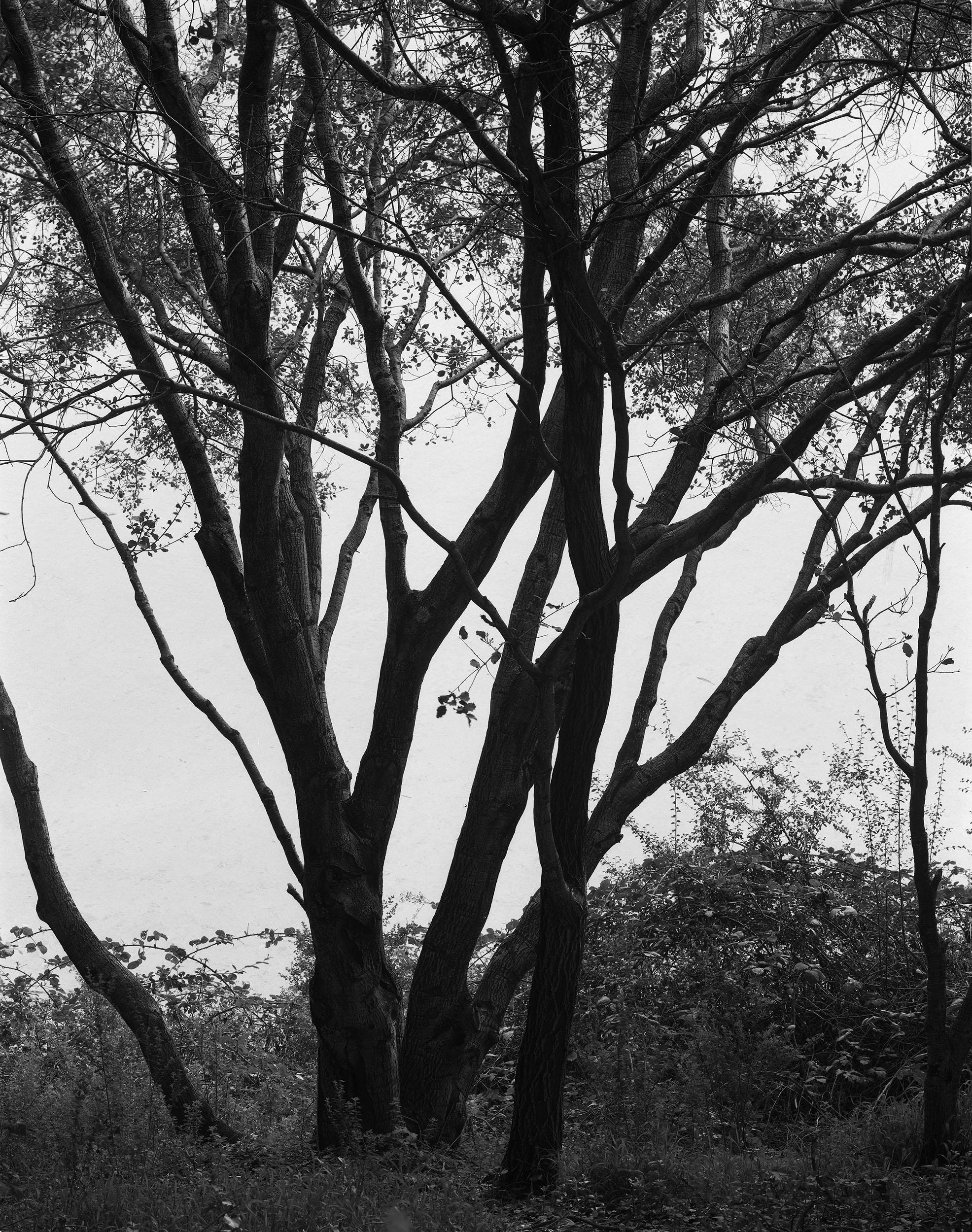 mountain view trees.jpg