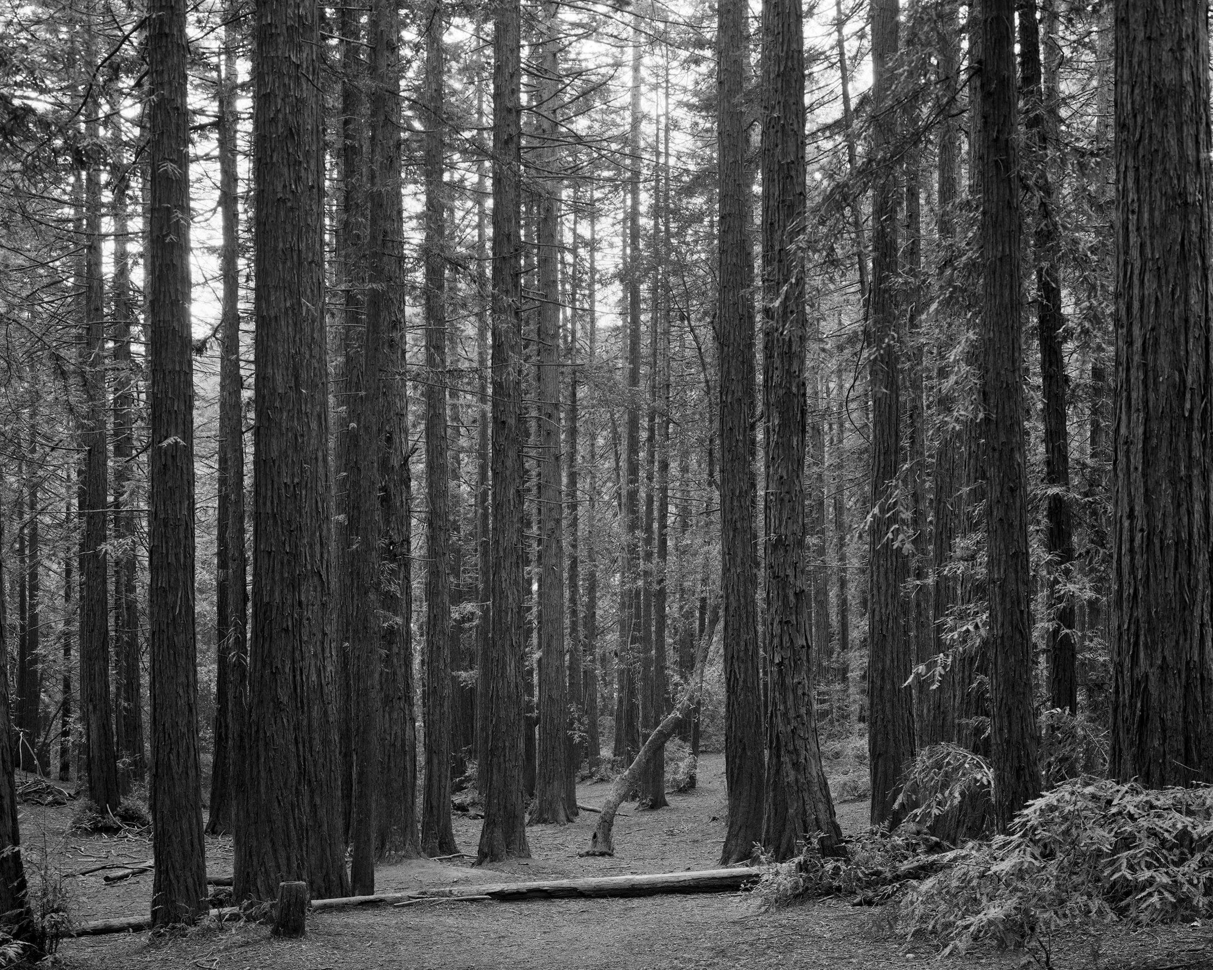 Redwood Regional Park - 005 sm.jpg