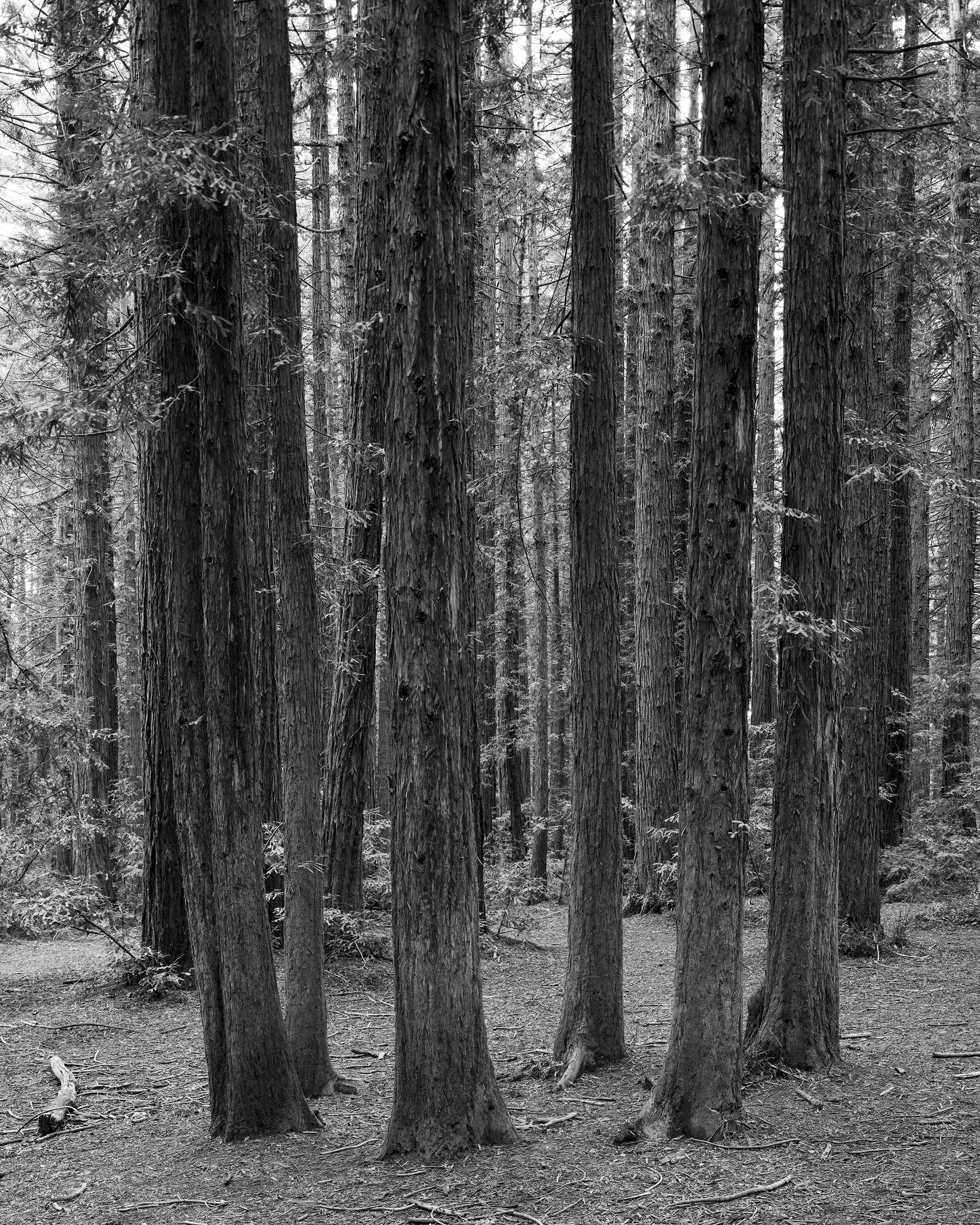 Redwood Regional Park - 004 sm.jpg
