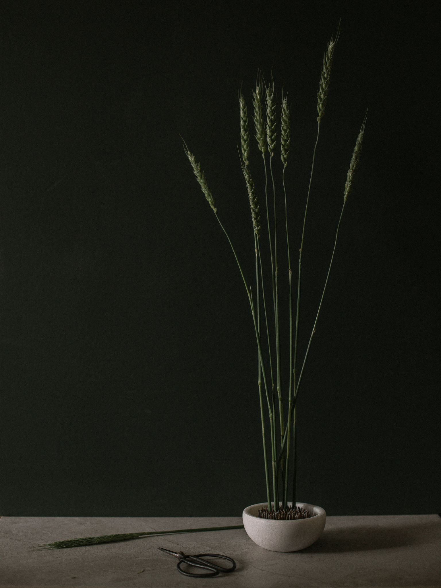 Wheat by Danielle Sabol | daniellemsabol.com
