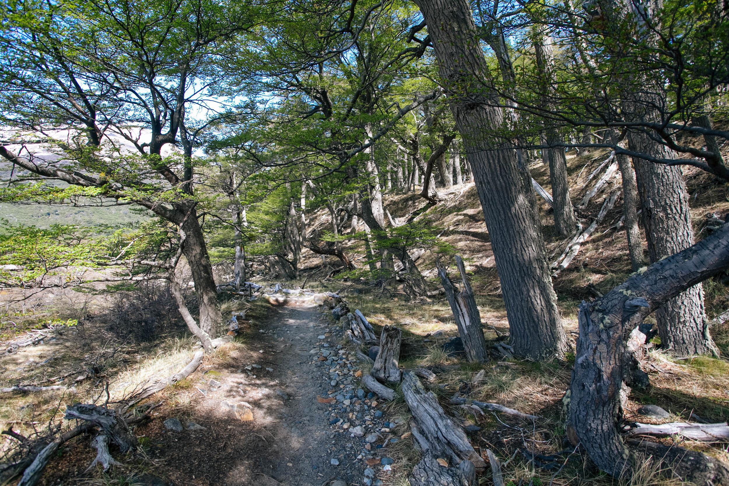 Trilha Laguna Torre El Chalten 5.jpg