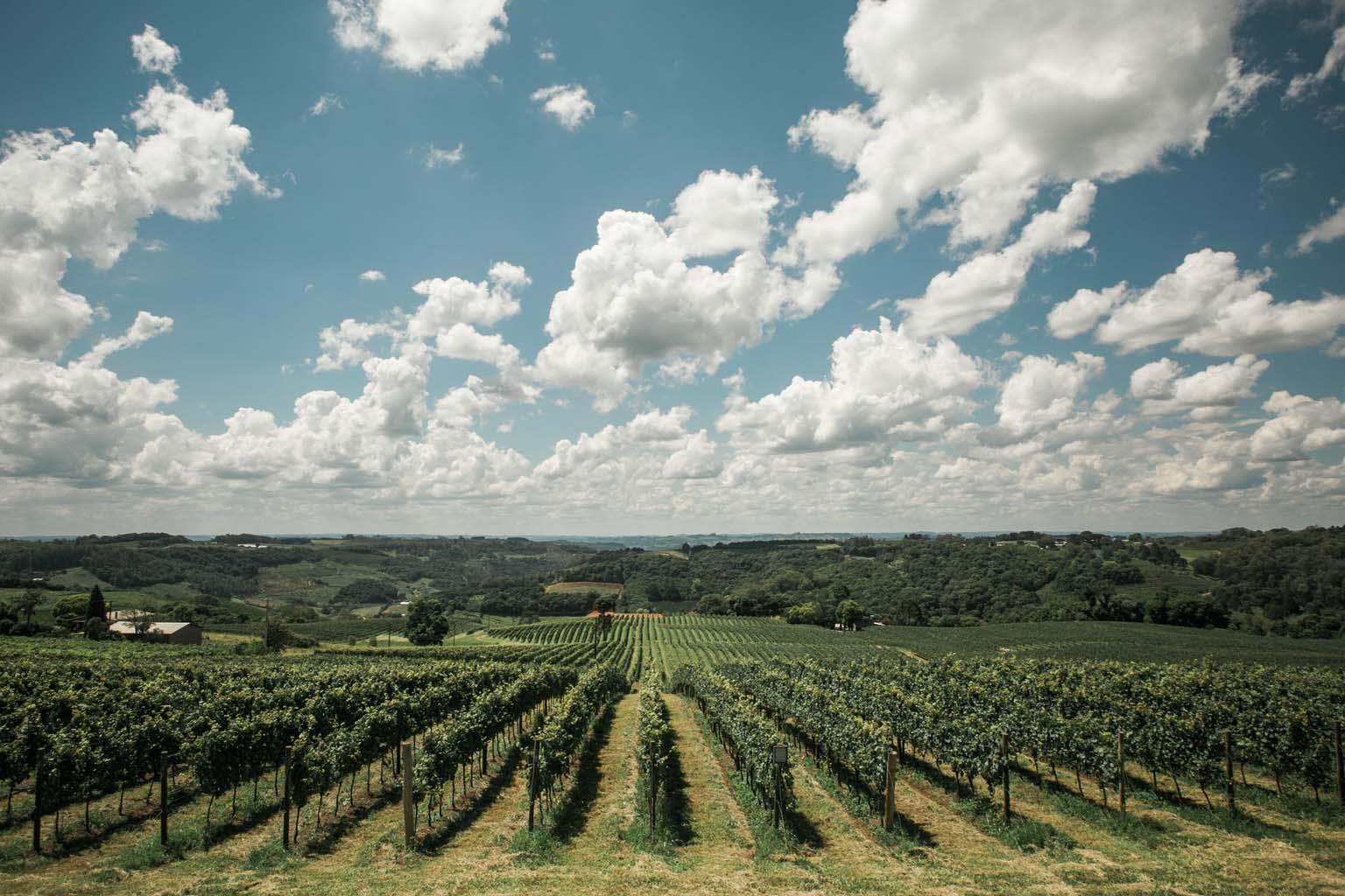 cave geisse vinicola serra gaucha