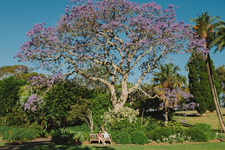 Engagement-Photographer-Sydney-Bontanic-Gardens-C1.jpg