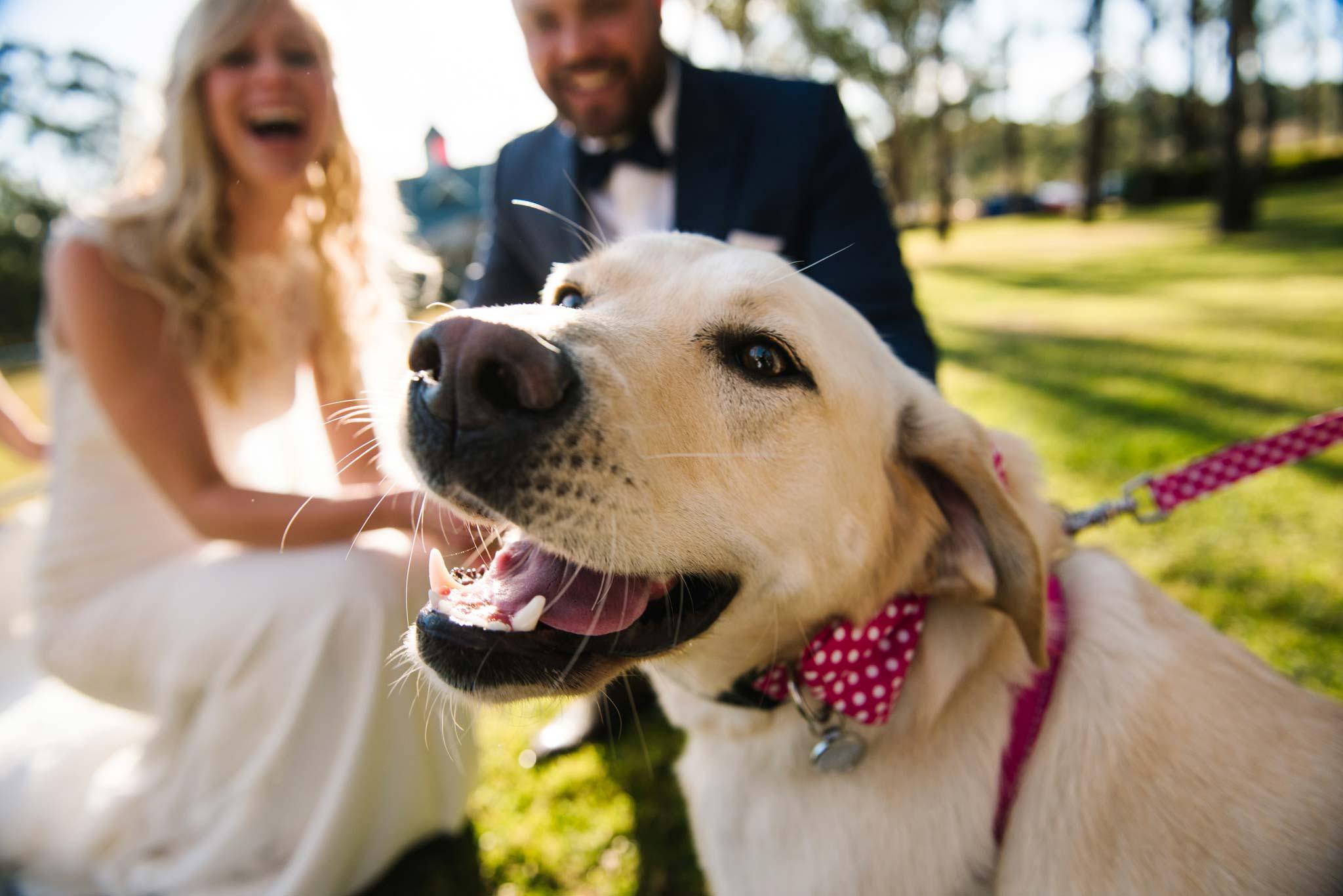 Ring bearer dog and newlyweds