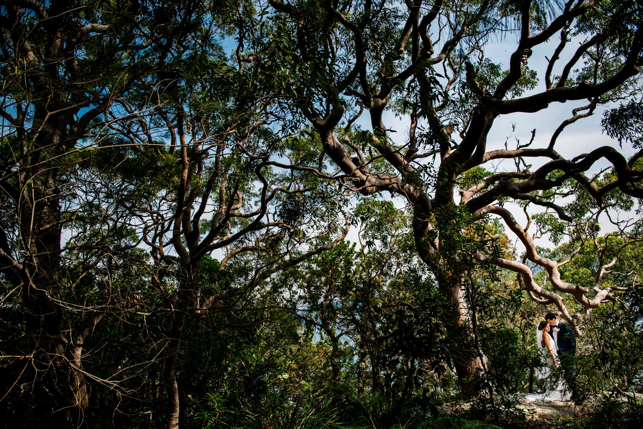 Newlyweds amongst gum trees in forest near Whale beach