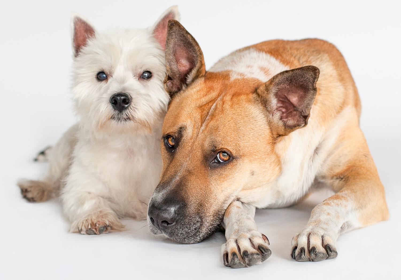 photographer sydney dogs.jpg
