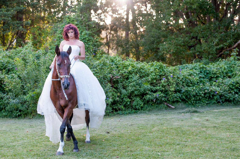 photography sydney horses.jpg