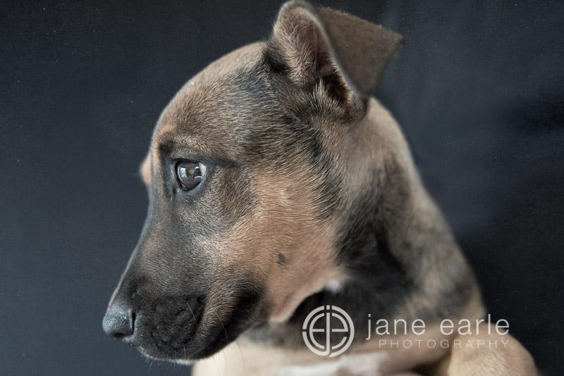 Pet-Photography-Perth.jpg