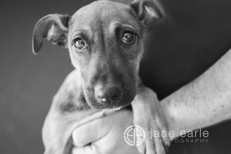 Perth-dog-photographer.jpg
