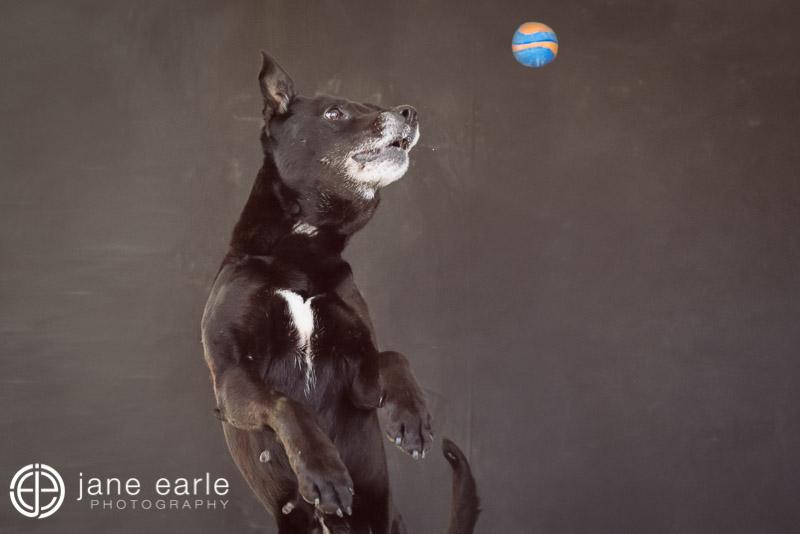 Perth_dog_photographer.jpg