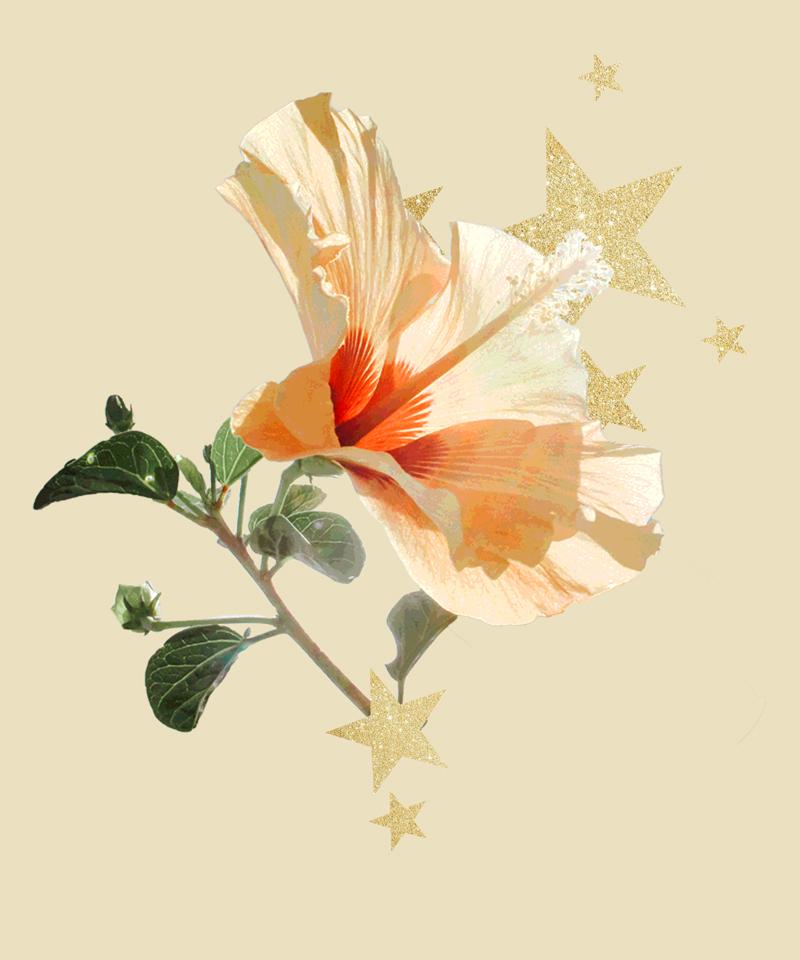 flower-stars.jpg