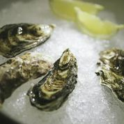 oysters on ice, bubbles.jpg