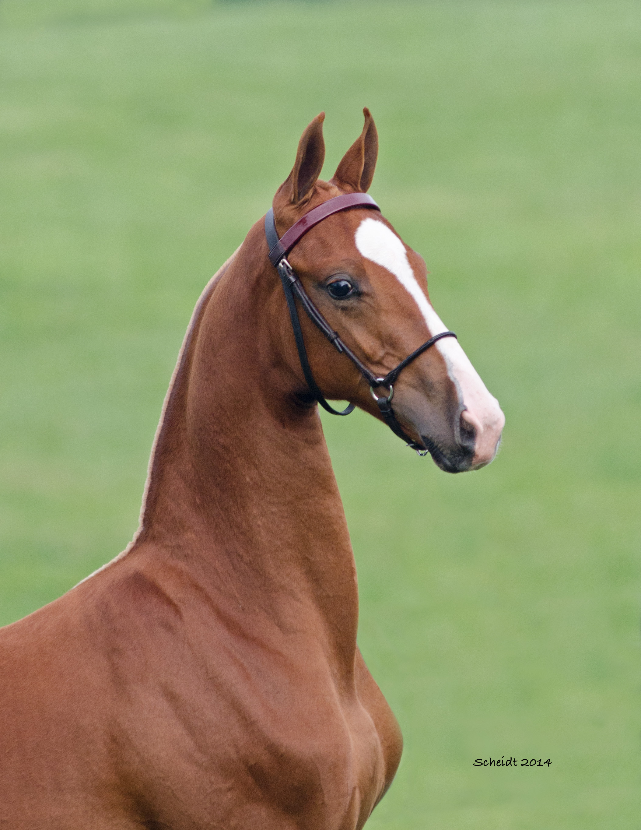 First Weanling Head Shot.jpg