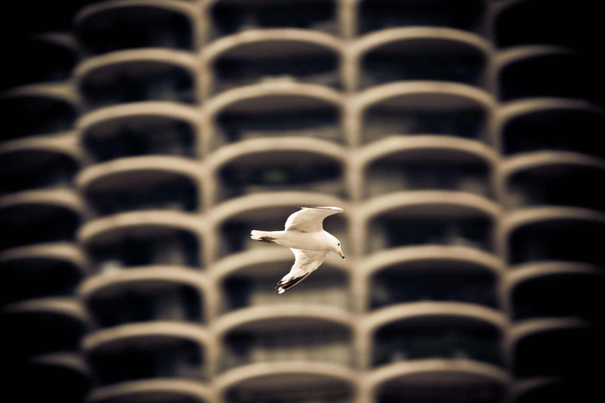 017_urban_flight.jpg