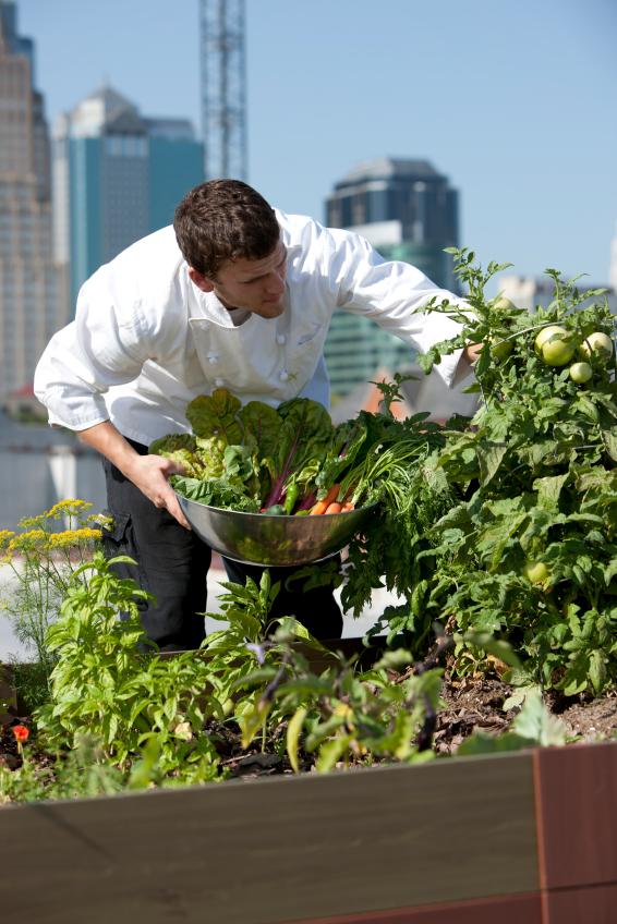 urban_farming_2.jpg