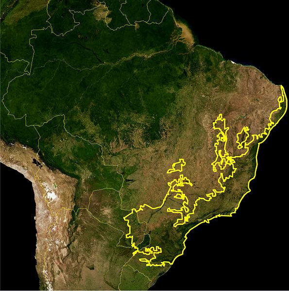 595px-Atlantic_Forest_WWF.jpg