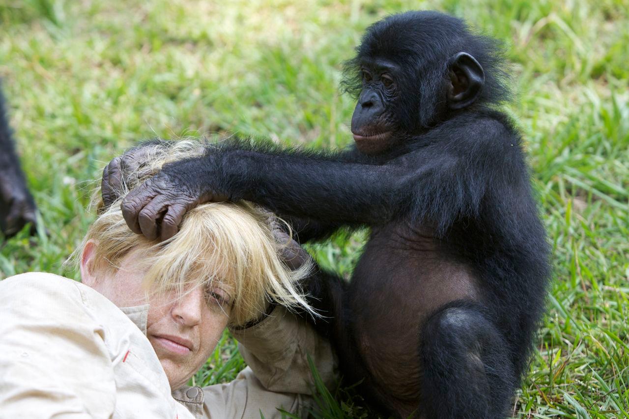 Shelly living amongst the bonobos at Lola Ya Bonobo, Democratic Republic of the Congo, 2008