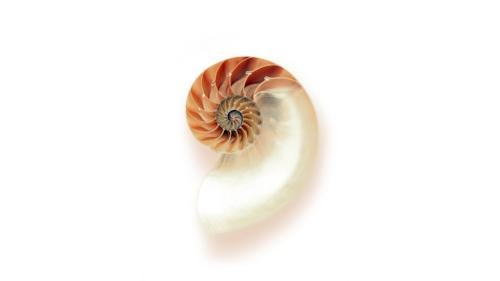 Spiral shell.jpg