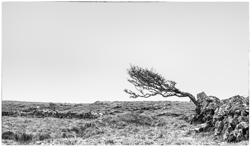 And I did do a bit of landscape photography in the end, I found this very lonely tree. Photographers can't get enough of lonely trees, there is something about them....