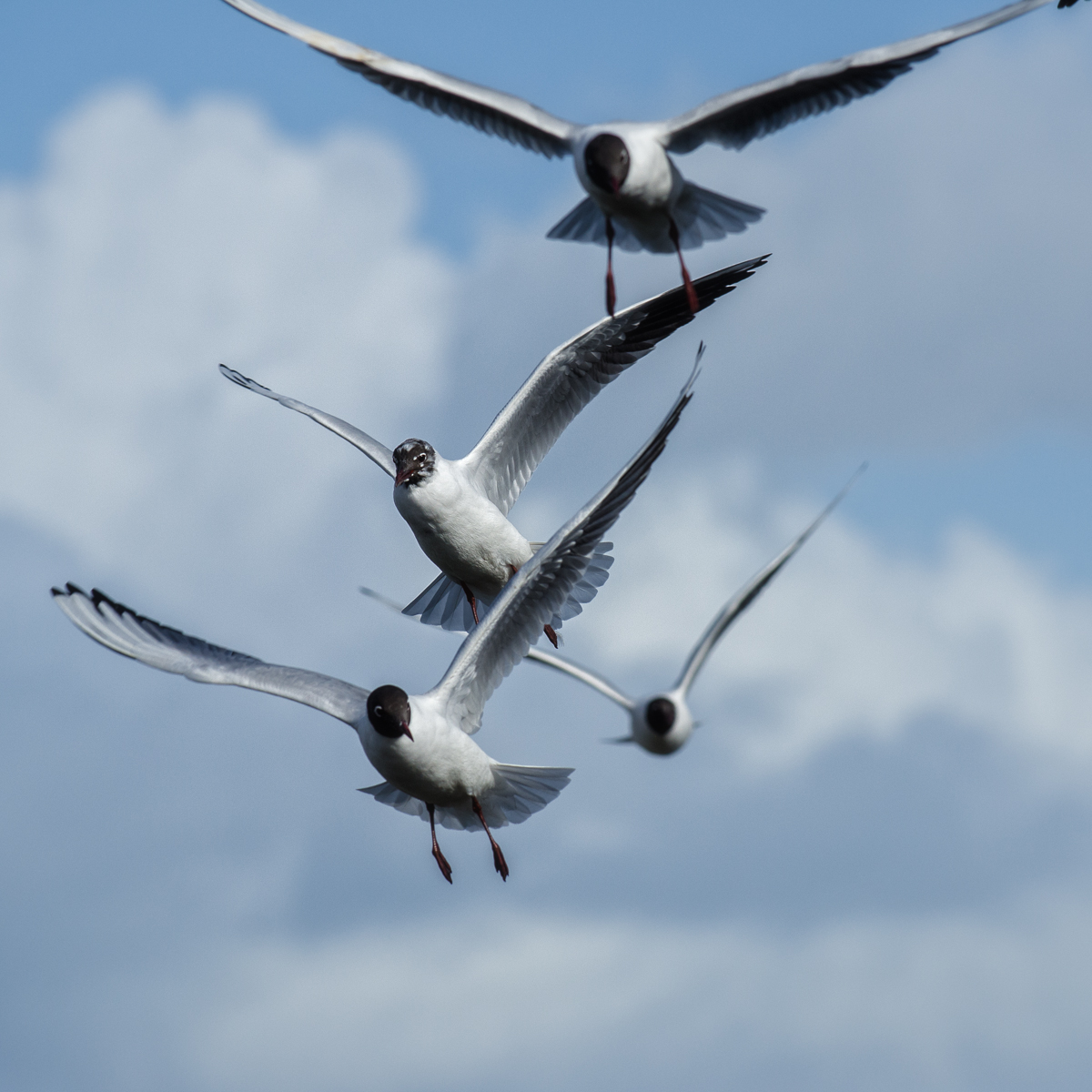Click on the image to see more birds in action
