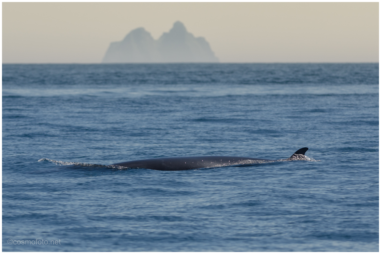 Mink whale in front of the Skelligs