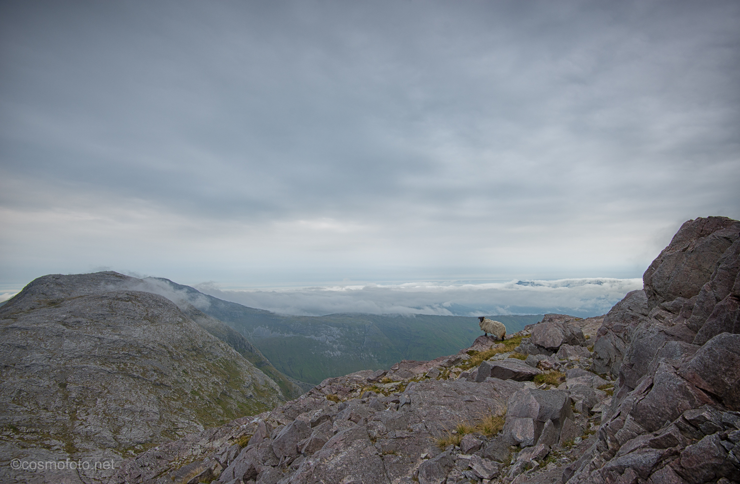 A lonely sheep halfway up the mountain
