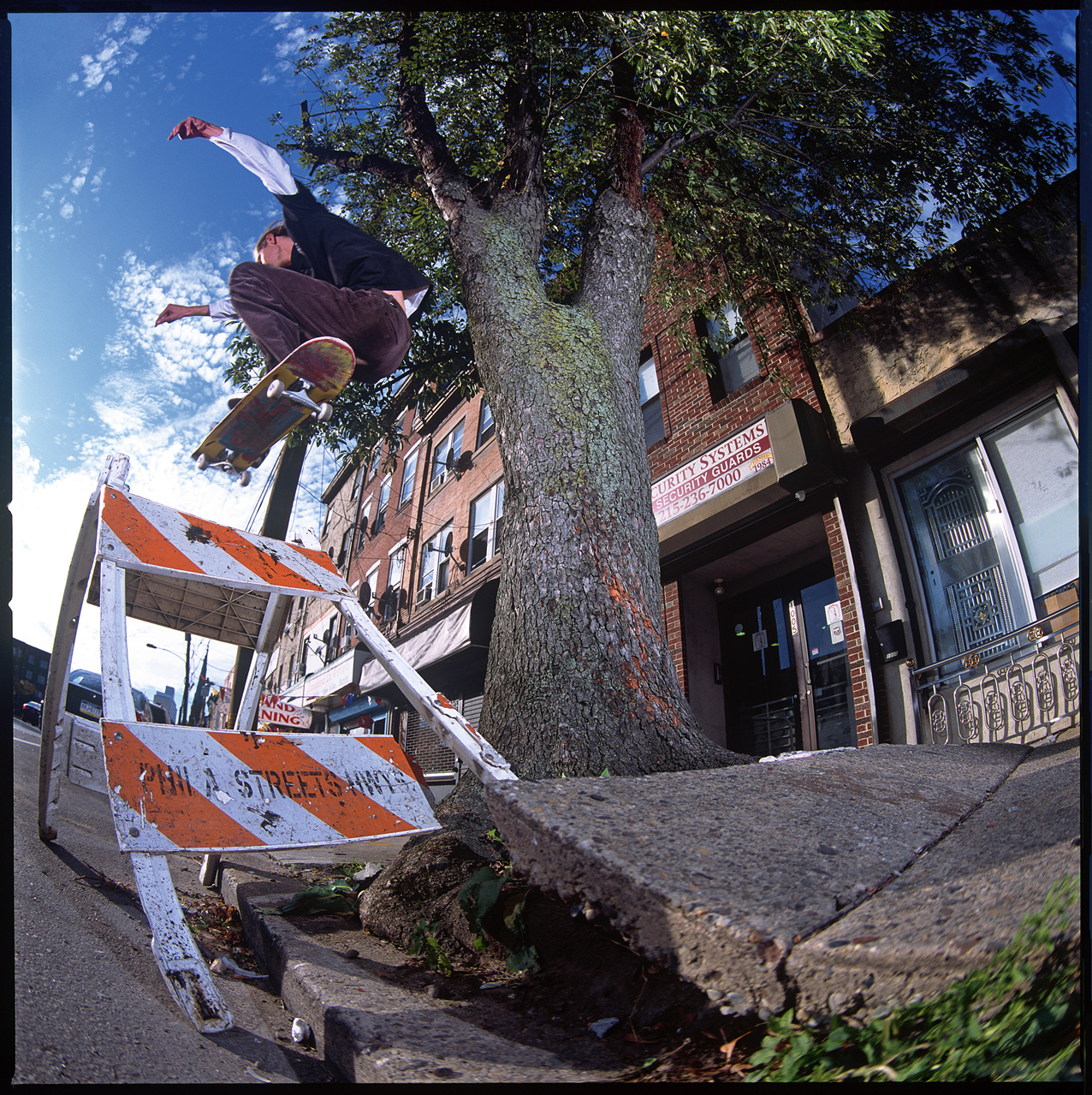 Tree Wallie