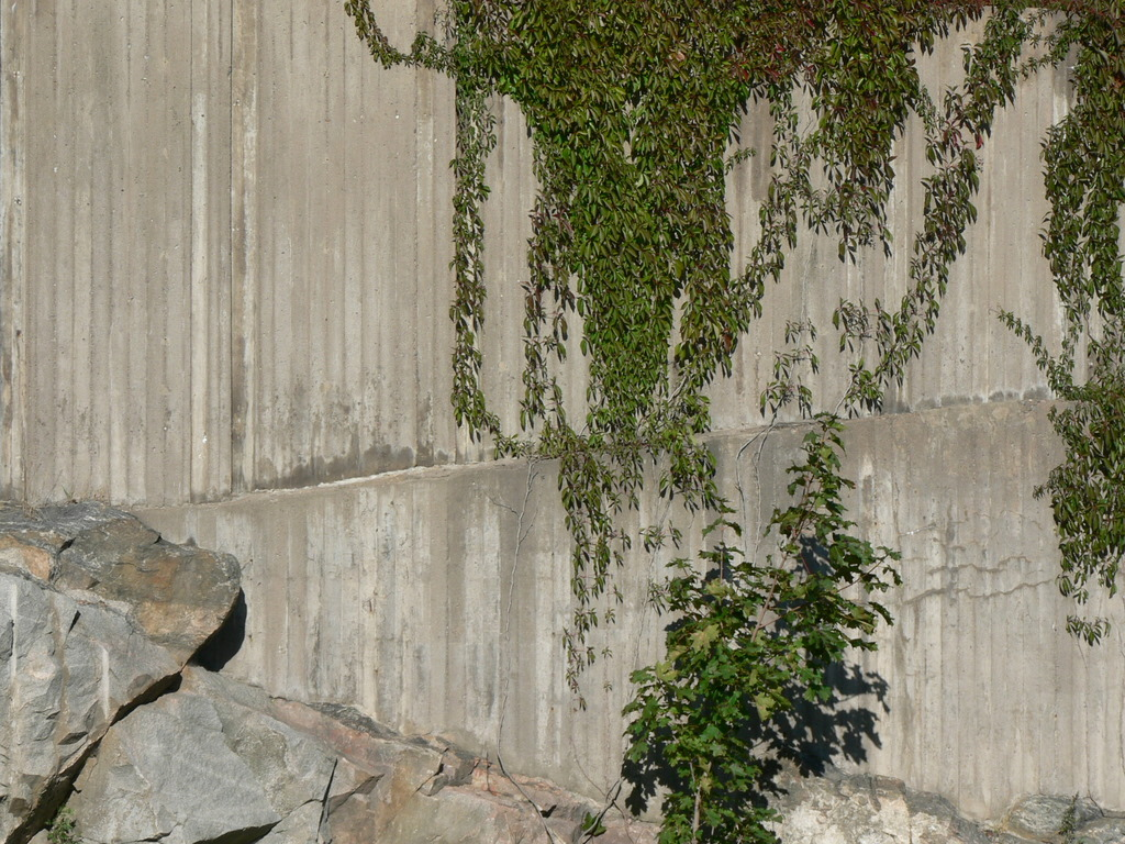 plants-climbing-concrete-wall-2.jpg
